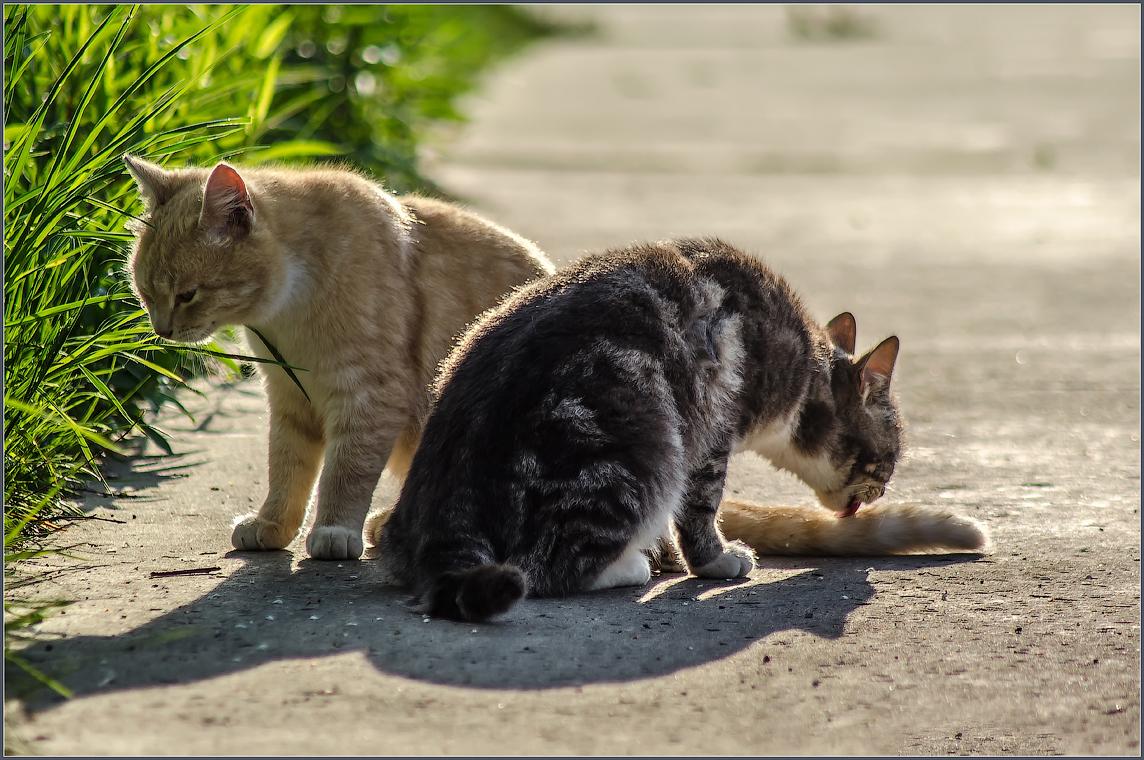 Братская любовь или из жизни молодого подрастающего кошачьего поколения ( снято 12 мая 2013 г.)