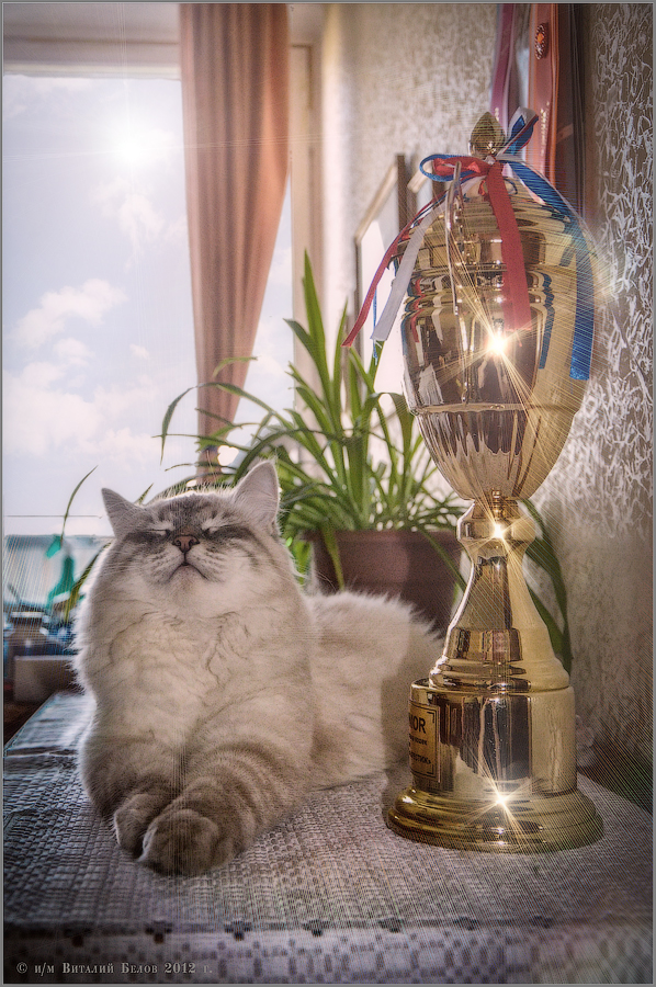 В лучах чемпионской славы (снимок сделан 16 мая 2012 г.)