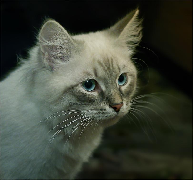 Кошачий образ ( 19 февраля 2012 г.)