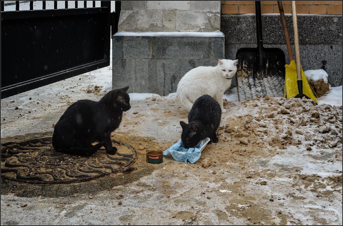 Кошачья трапеза_2 ( Снимок сделан 11 января 2013 г.)