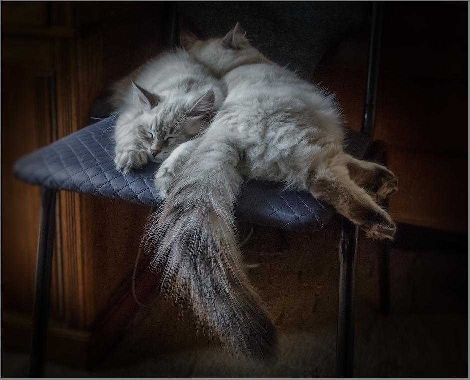 Кошачий хвост или вдвоём теплее ( Снимок сделан 17 сентября 2013 г.)
