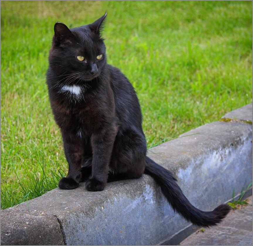 Котик из прошлого (снимок сделан 4 июня 2009 г.)