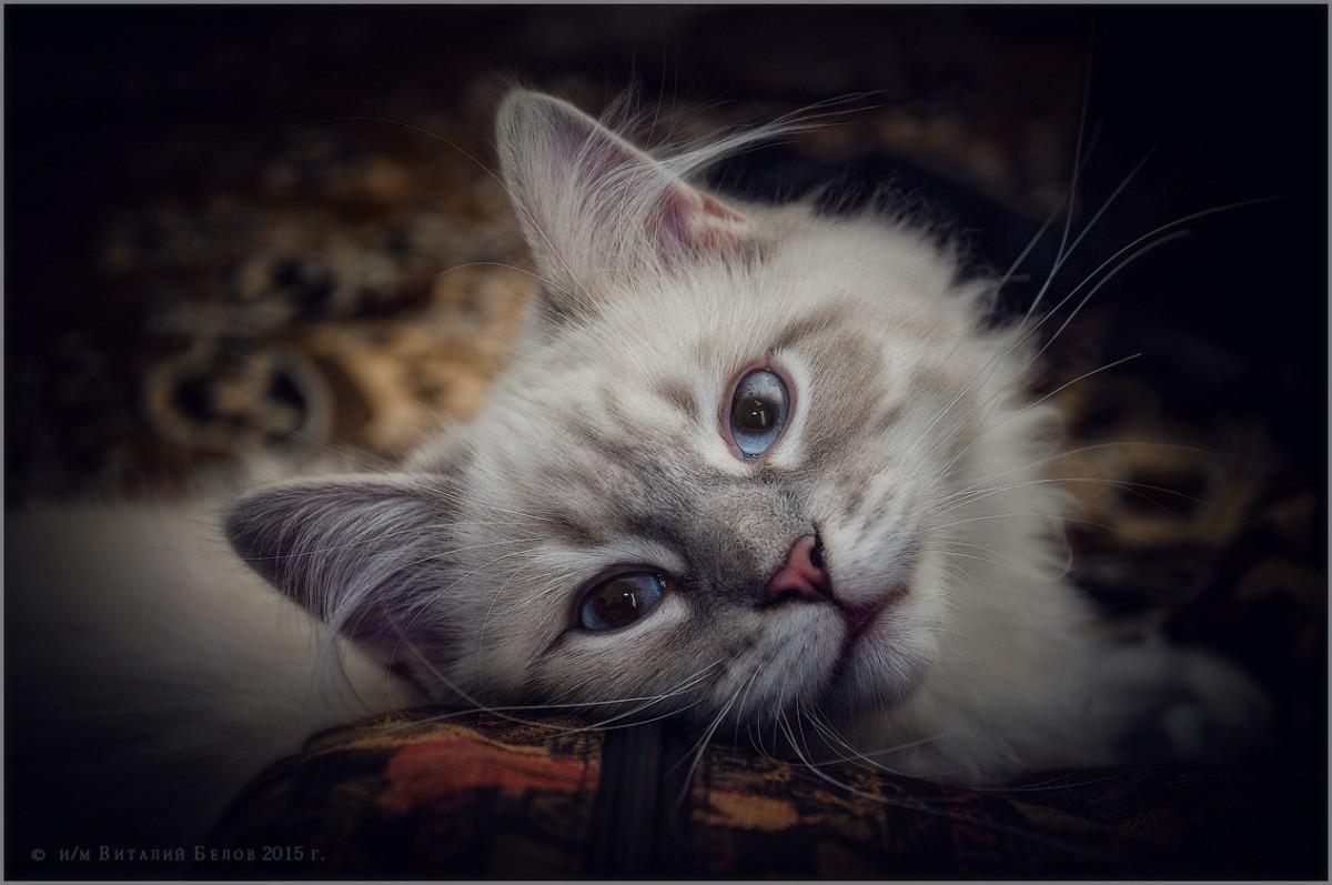Кокетливый котенок (снимок сделан 10 января 2015 г.)