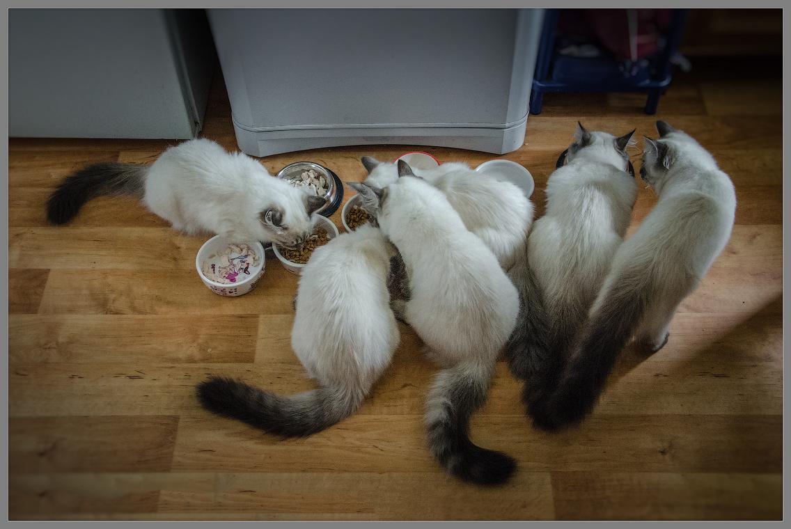 Кошачье стадо ( Снимок сделан 17 сентября 2013 г.)