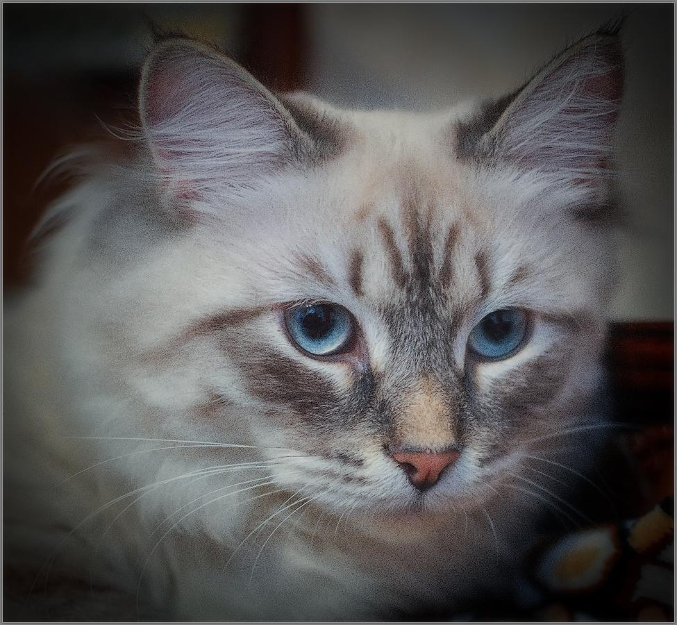 Портрет кошки (снимок сделан 15 апреля 2012 г.)