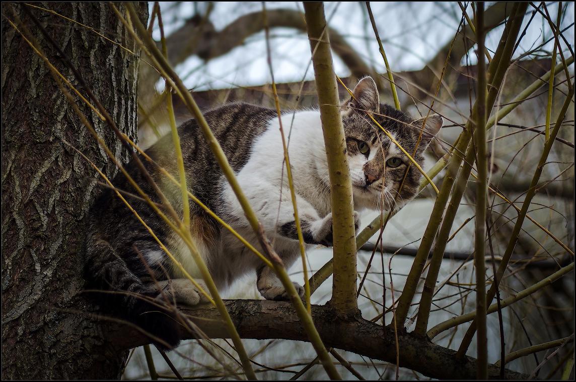 На древо взгромоздясь ( Снимок сделан 24 апреля 2013 г.)