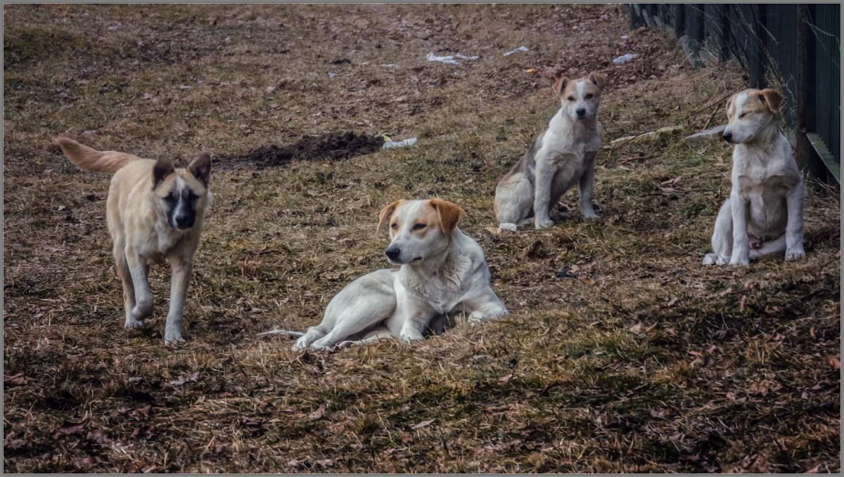 Беспризорные (снимок сделан 1 марта 2014 г.)