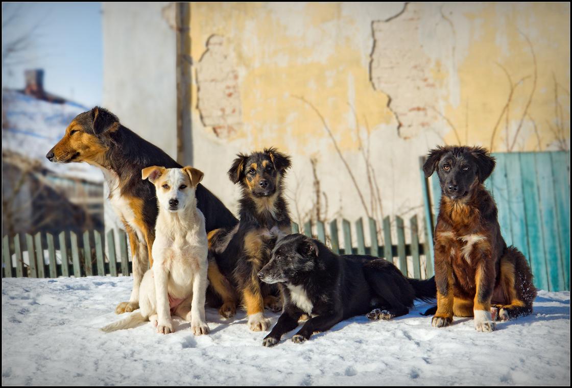 Собачье братство или один за всех и все за одного ( 23 февраля 2013 г.)