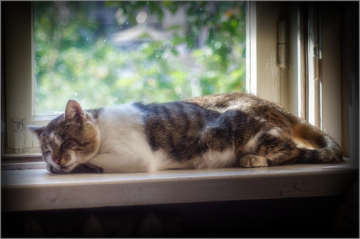 Отдыхающий на подоконнике ( Снимок сделан 23 августа 2013 г.)