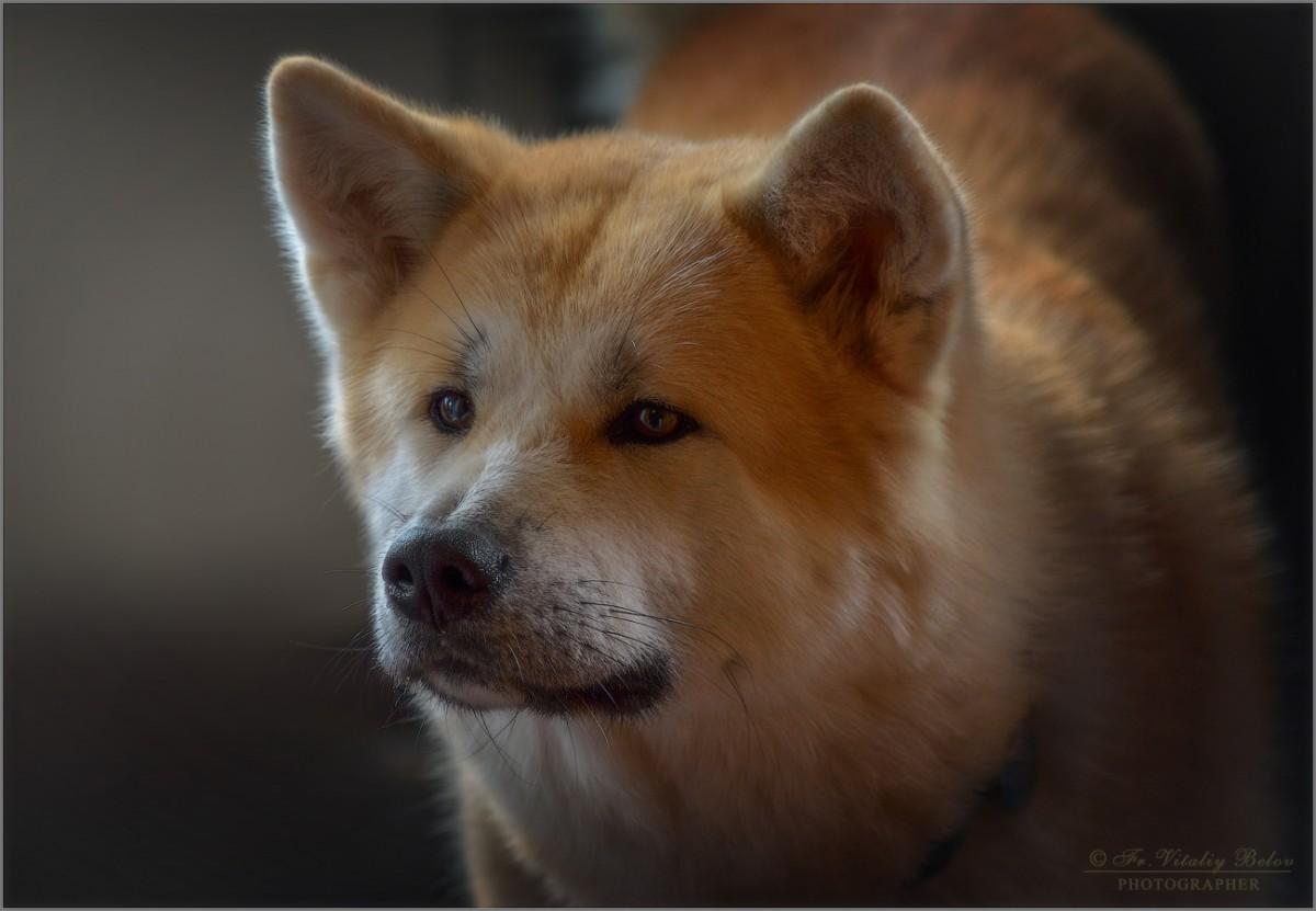 Юги простой, плюшевый, медвежонок (снимок сделан 27 сентября 2012 г.)