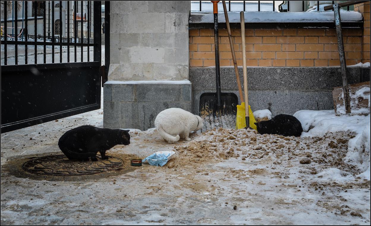 Кошачья трапеза_1 ( Снимок сделан 11 января 2013 г.)