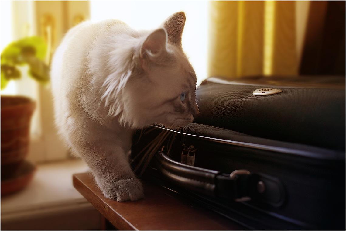 Я у цели, или покушение на портфель, возможно с рыбой ( 19 февраля 2012 г.)