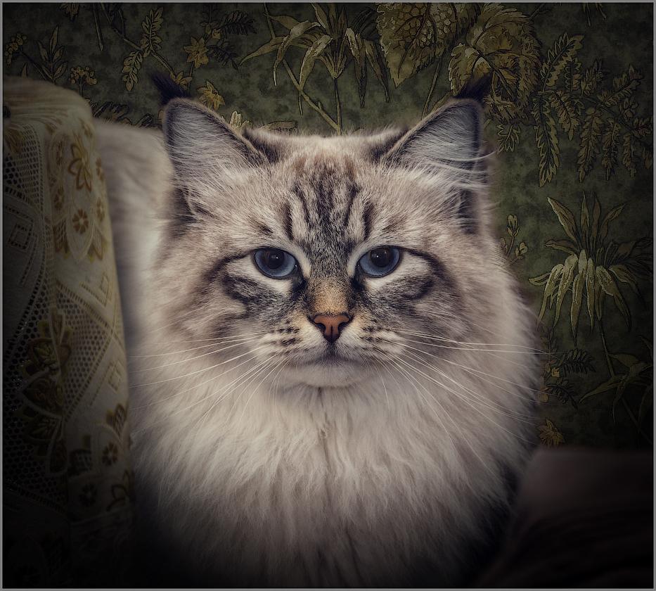 Портрет Актинидии (снимок сделан 10 января 2015 г.)