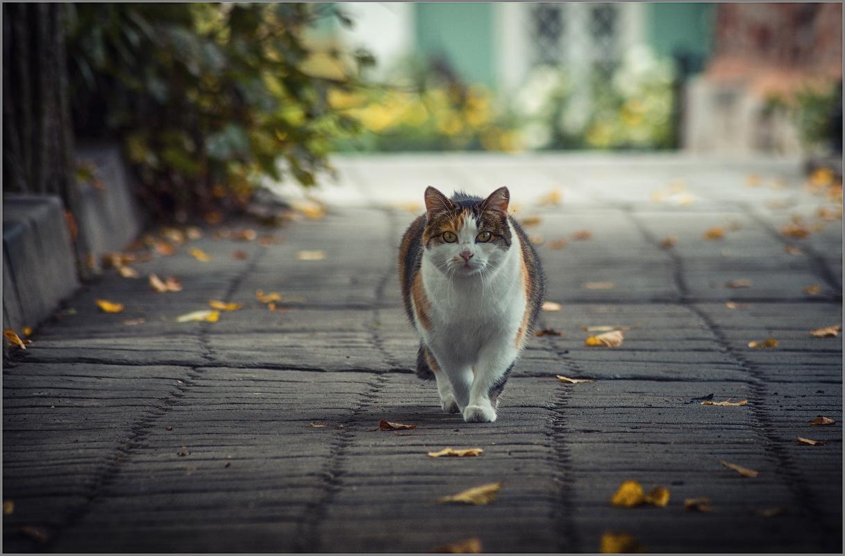 Осенняя кошка (снимок сделан 2 сентября 2012 г.)