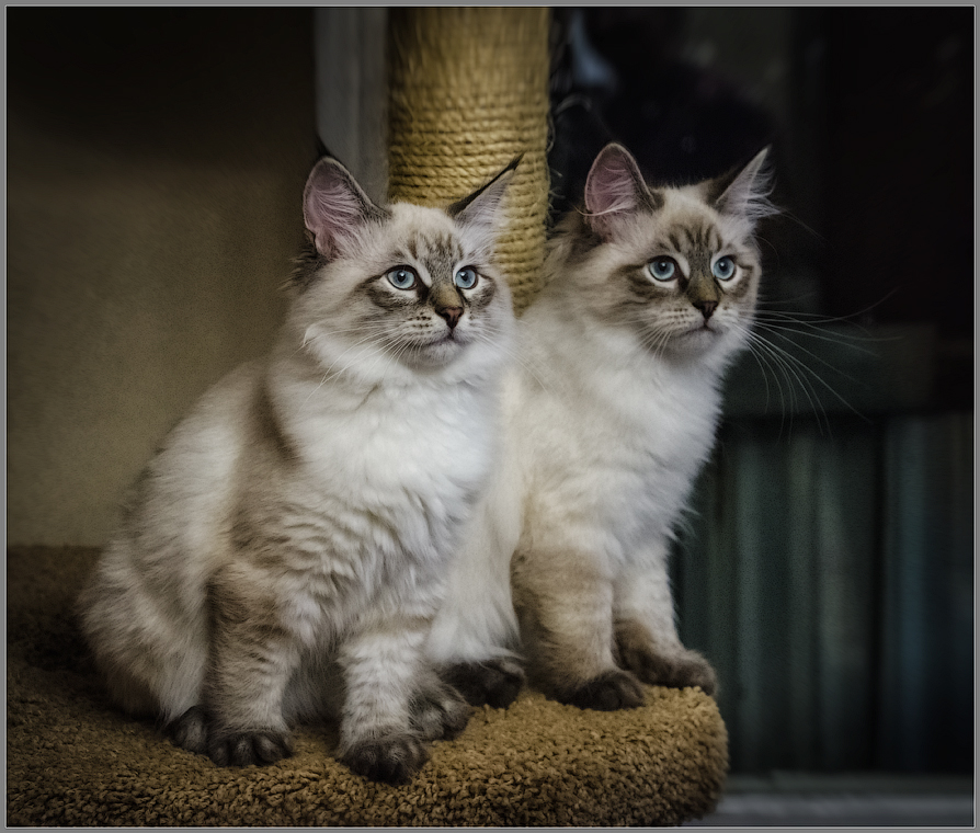 Братик и сестричка ( Снимок сделан 18 сентября 2013 г.)