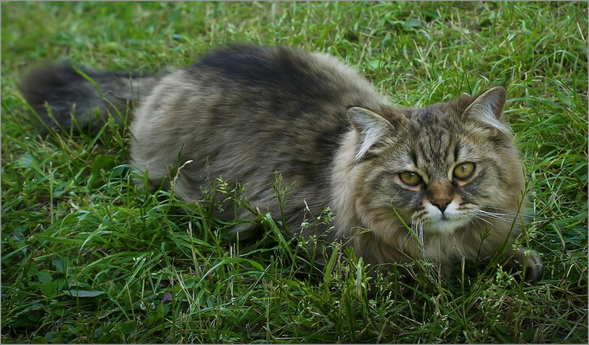 На летних травах (снимок сделан 14 июня 2011 г.)