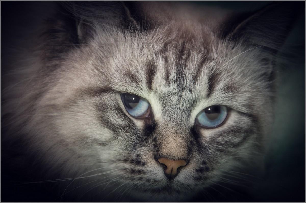 Взгляд с прищуром (снимок сделан 22 апреля 2015 г.)