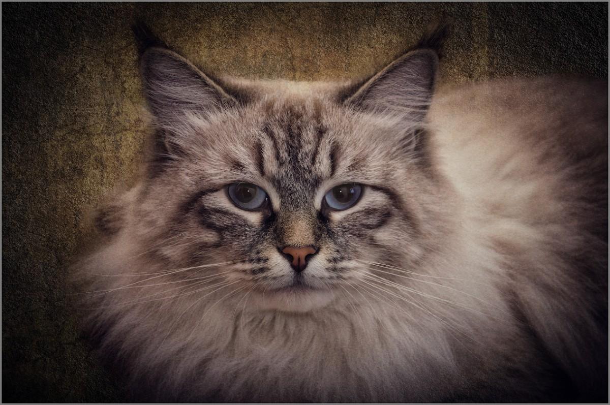 Взгляд сибирячки (снимок сделан 10 января 2015 г.)