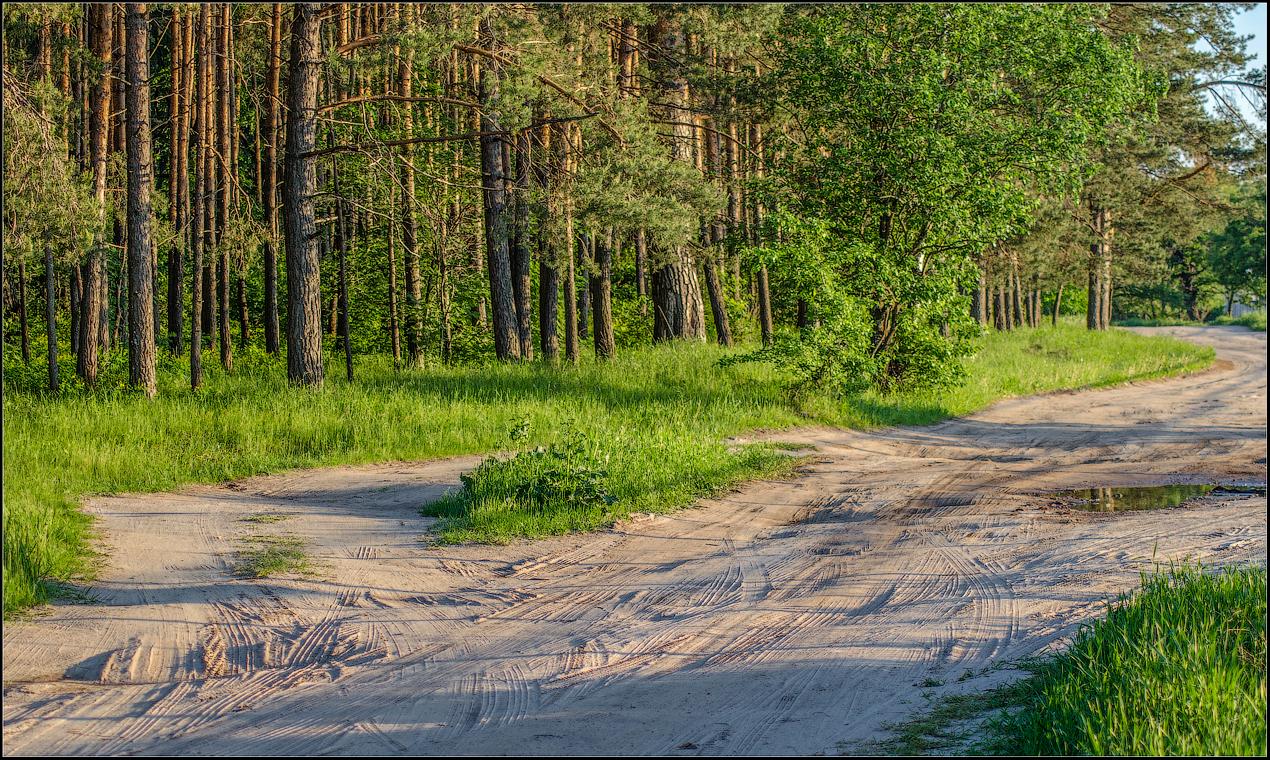 Изъезженная дорога ( Снимок сделан летом 2013 г.)