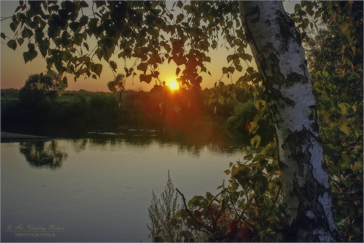 Березка у реки (снимок сделан 31 июля 2009 г.)