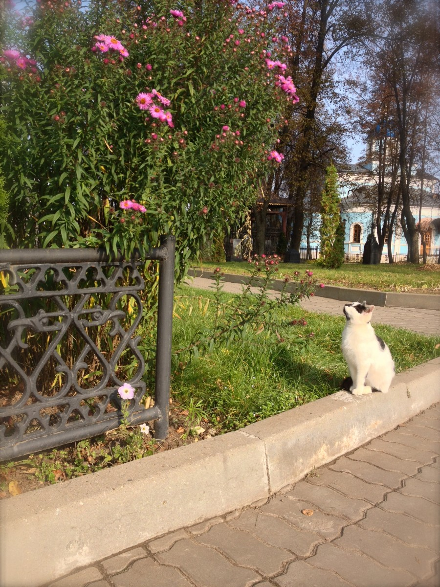 Кошачье созерцание (10.10.2013 г.)