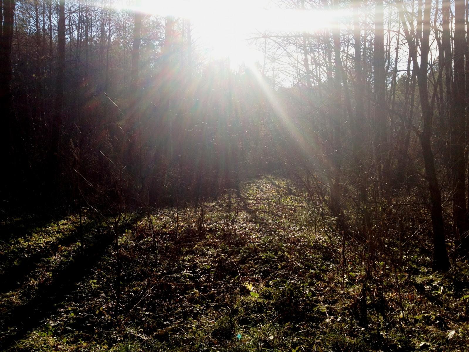 Размышления в Оптинском лесу - 3