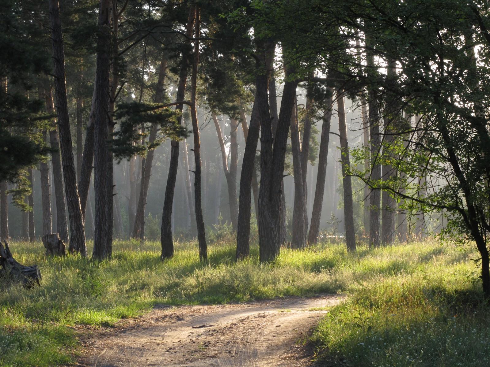 пешком с Мехзавода