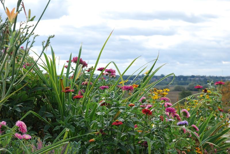 Цветочный пейзаж