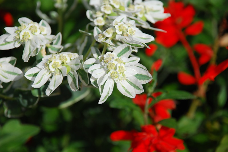 Оптинские цветы