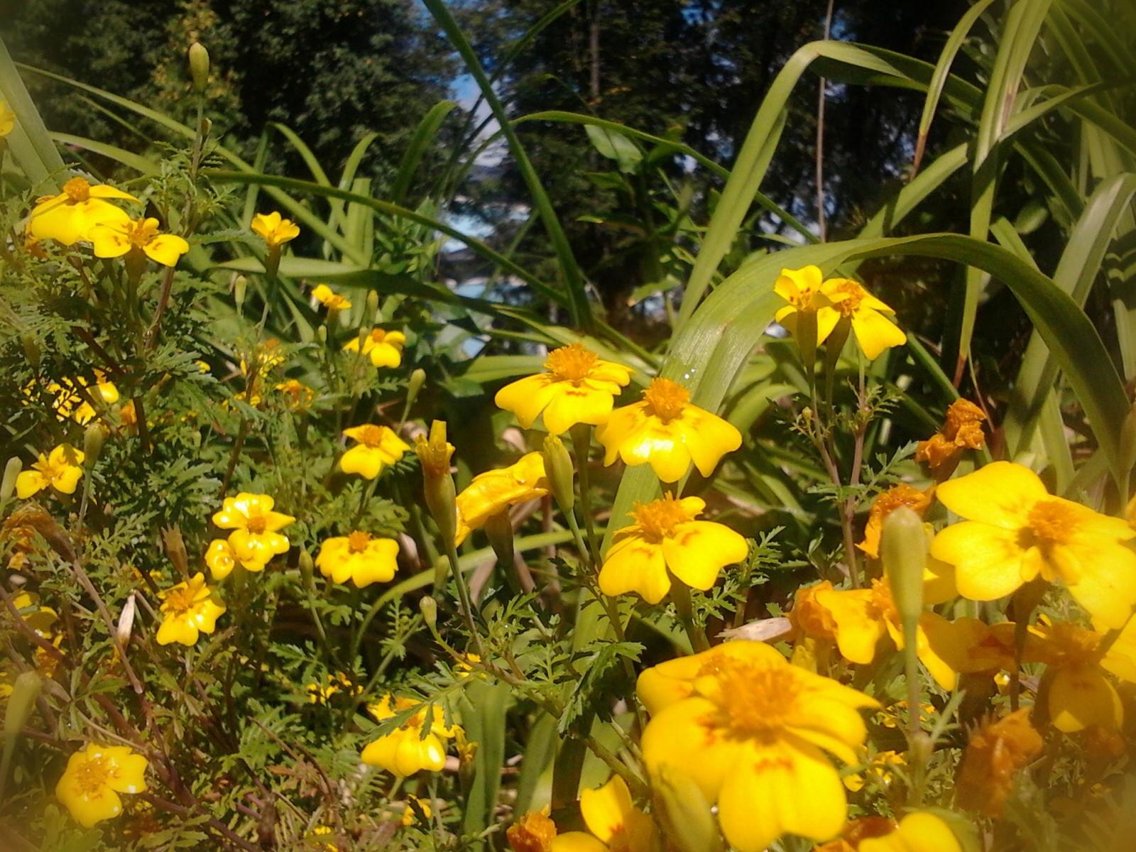 Цветы (1) 11.08.2012