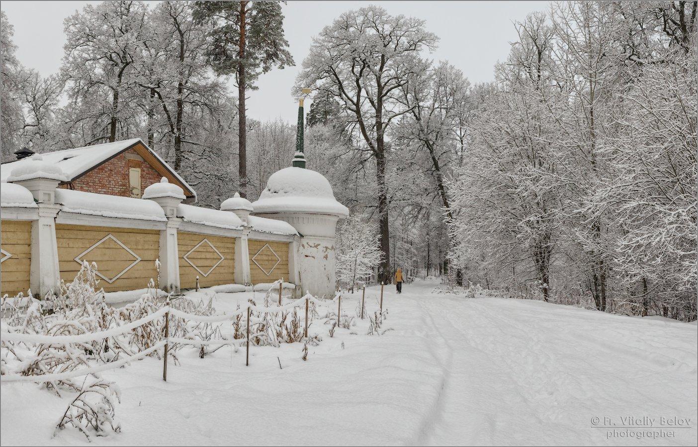 По свежему снегу (снимок сделан 3 января 2017 г.)