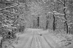 Зимнее убранство леса (снимок сделан 3 февраля 2015 г.)