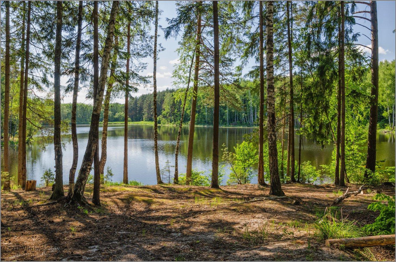 Весенний лес у озера (снимок сделан 23 мая 2018 г.)