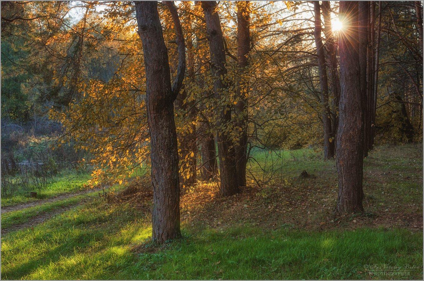 Сияло солнце на Покров, листва как золото горело (снимок сделан 14 октября 2013 г.)