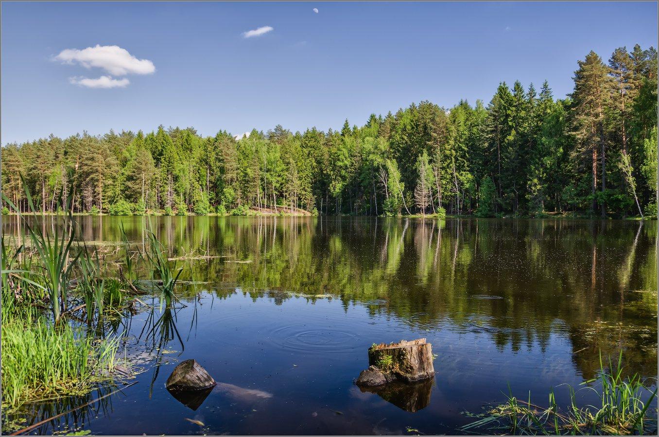 На лесном озере (снимок сделан 23 мая 2018 г.)