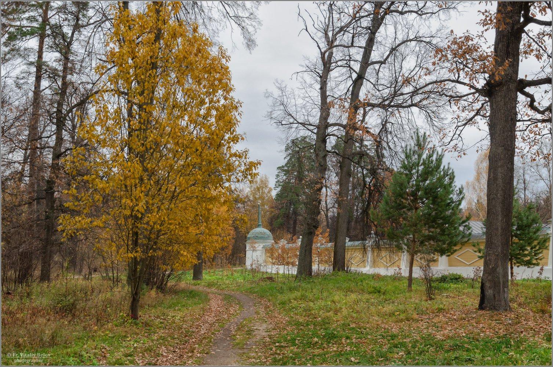 Осенняя грусть (снимок сделан 16 октября 2014 г.)