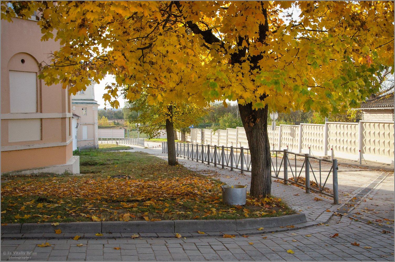 02_Золотой клён (снимок сделан 9 октября 2018 г.)