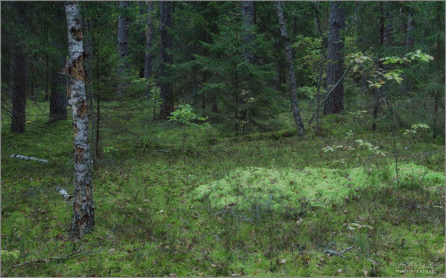 Мшистый лес (снимок сделан 24 сентября 2017 г.)