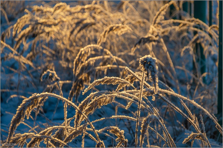 01_Золотые травы (снимок сделан 30 ноября 2018 г.)