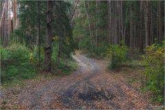 Лесная дорога (снимок сделан 17 октября 2017 г.)