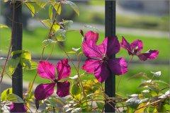 Цветочный витраж (снимок сделан 20 октября 2012 г.)