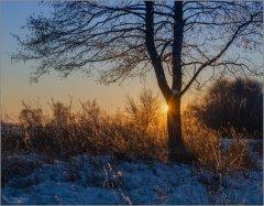 Коснулось солнце дерева, позолотило травы...