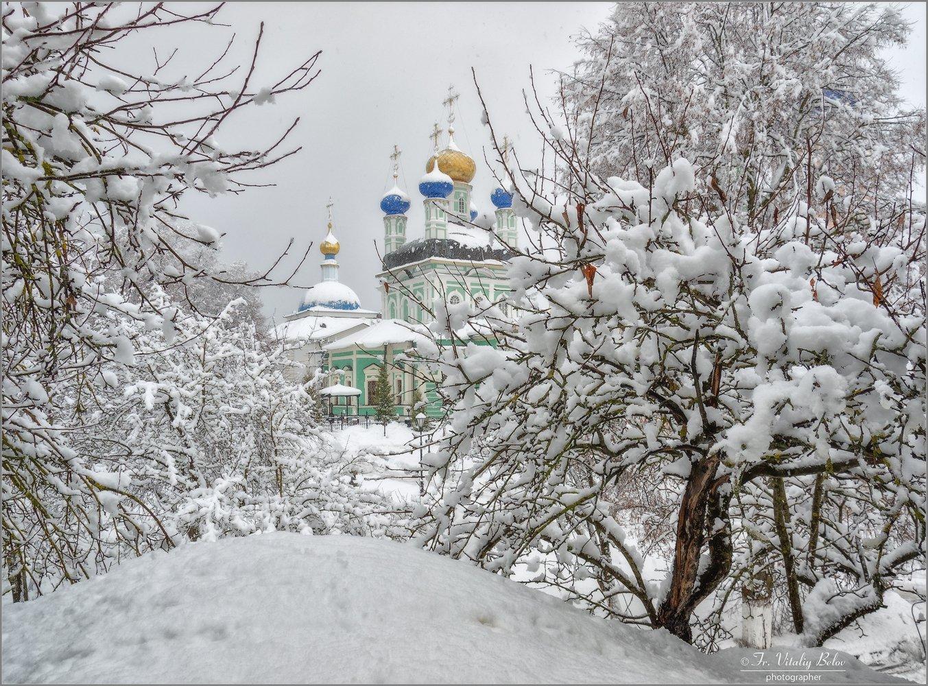 3193_Облепленные снегом.jpg