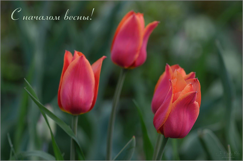 3213_Весны прекрасное начало (праздничная).jpg
