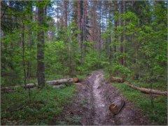 Противопожарная полоса в весеннем лесу