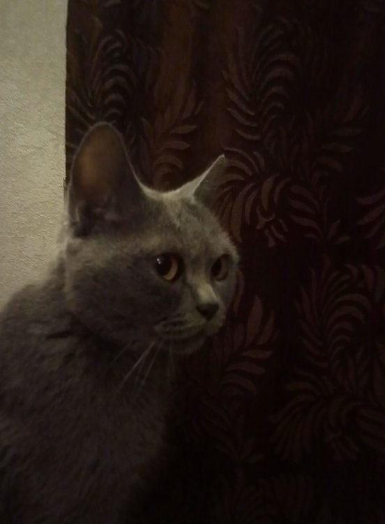 Маша_любимая_кошка.jpg