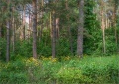 3297_Цветущий чистотел на лесной опушке.jpg