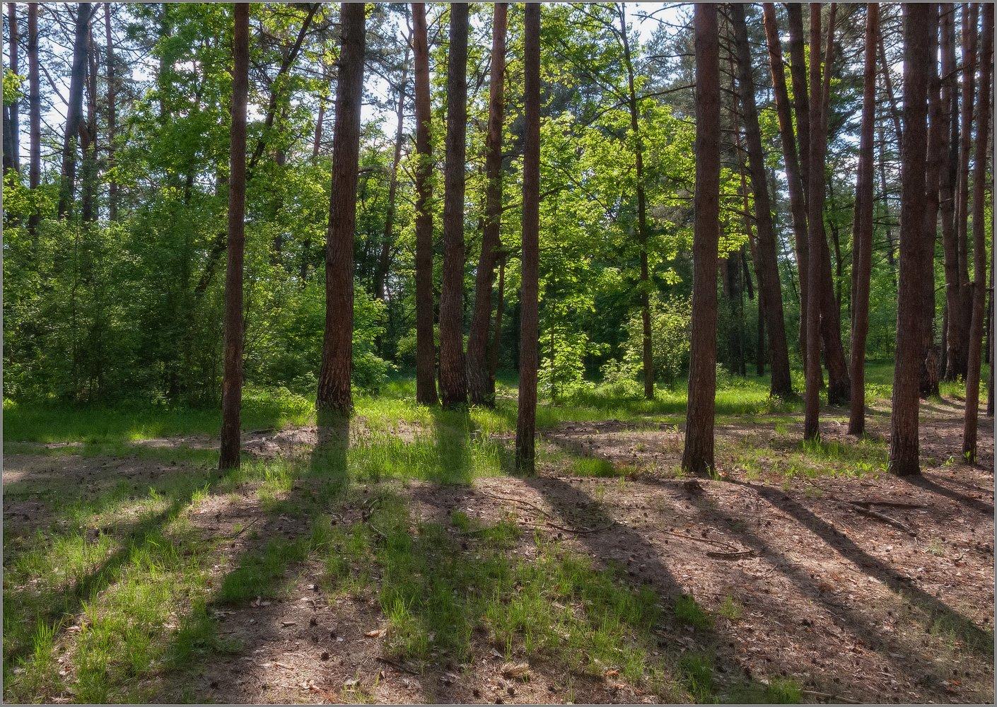 В майском лесу