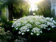 Как может уцелеть, со смертью споря, краса твоя - беспомощный цветок?