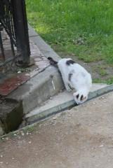 Оптинские кошки